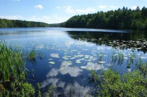 Rys 1. Borowo (kaszb. Jezoro Bòròwò) - śródleśne jezioro rynnowe [Wikipedia]