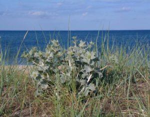 nadmorski park krajobrazowy mikołajek