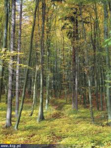 trójmiejski park krajobrazowy buki